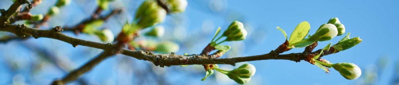 cropped-Spring-2.jpeg