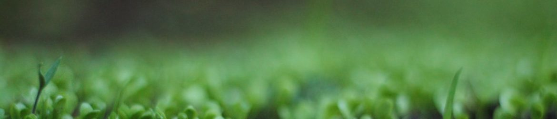 cropped-spring-3.jpeg